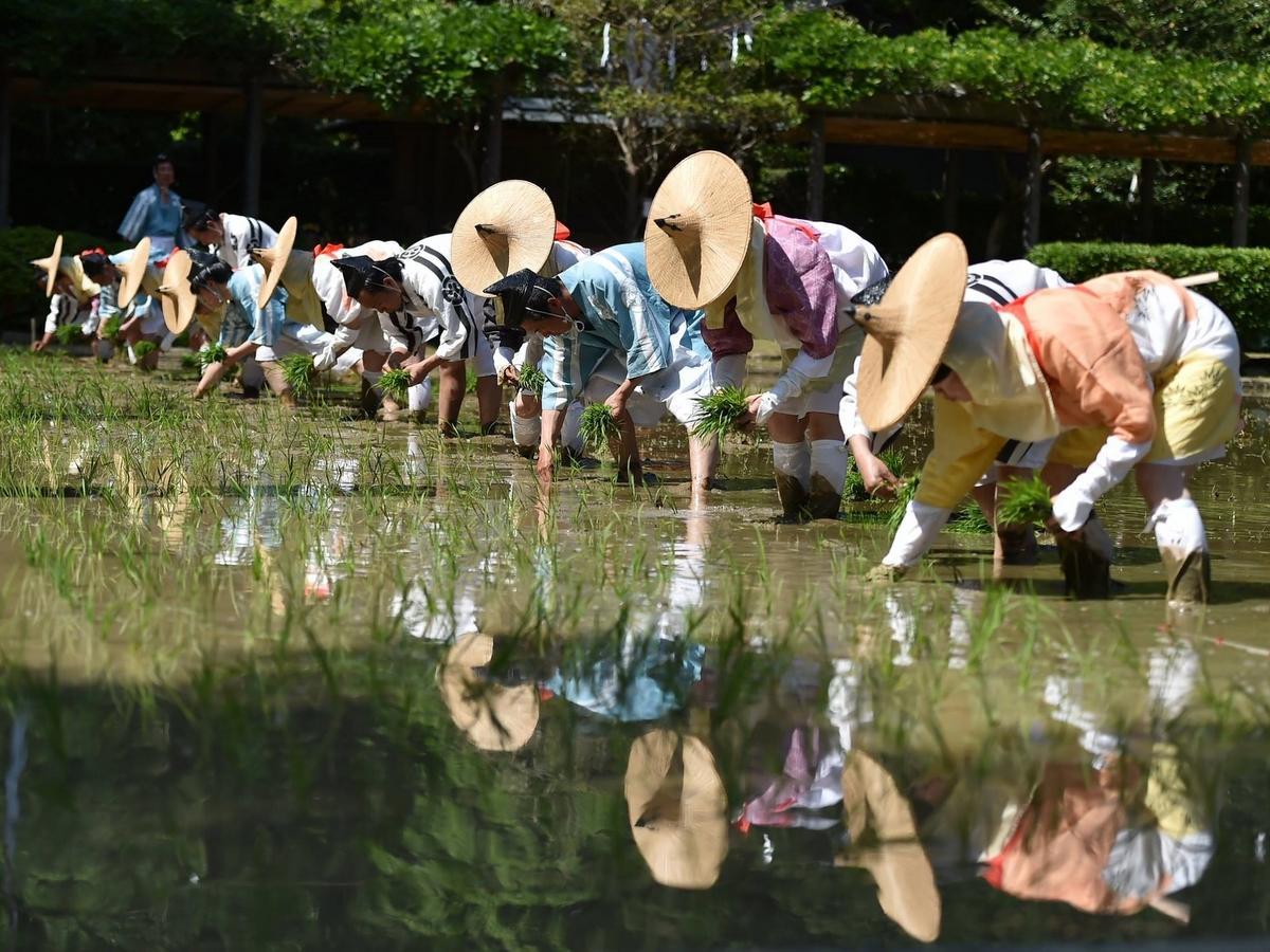 伊勢・猿田彦神社で御田植祭 安土桃山時代の衣装で一苗一苗心を込めて