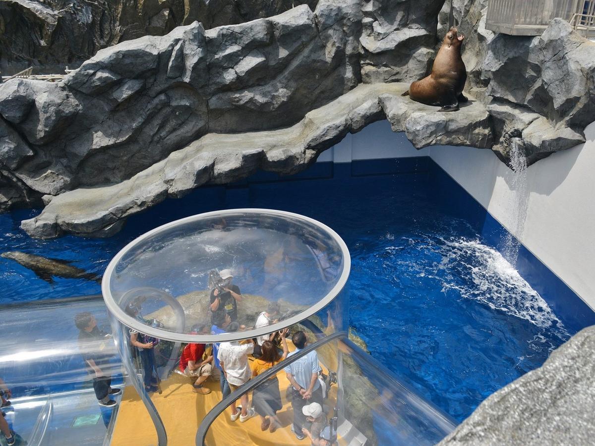 鳥羽水族館に「ヒレアシ王国」 厚さ5センチのアクリルチューブで浮遊疑似体験