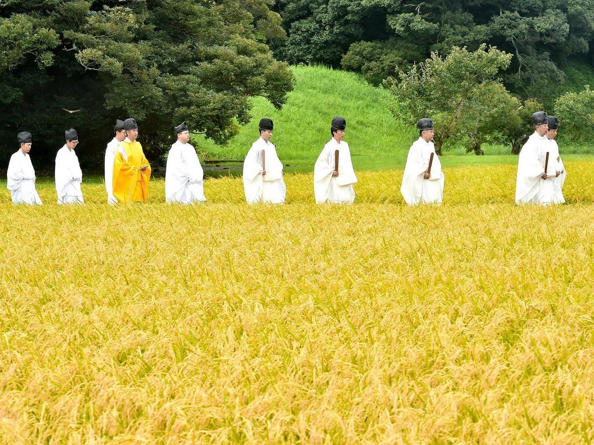 伊勢神宮の専用水田で「抜穂祭」 秋の実りに感謝