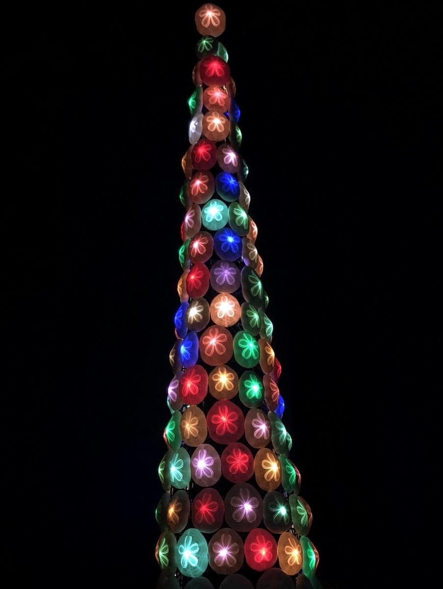 志摩マリンランドで「タコノマクラのクリスマスツリー」