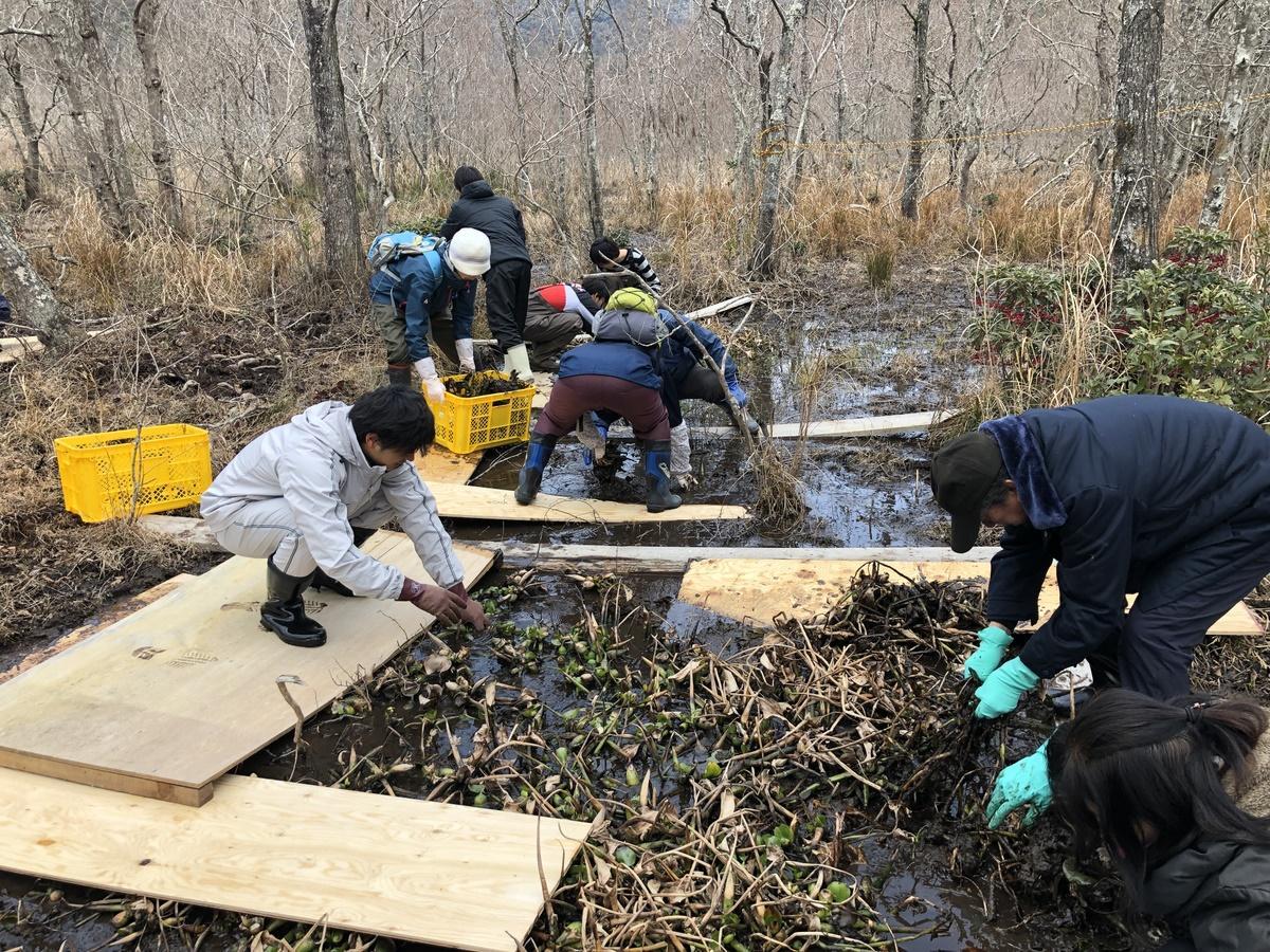 「ホテイアオイは外来植物」 伊勢志摩の押渕湿地で外来植物駆除作戦
