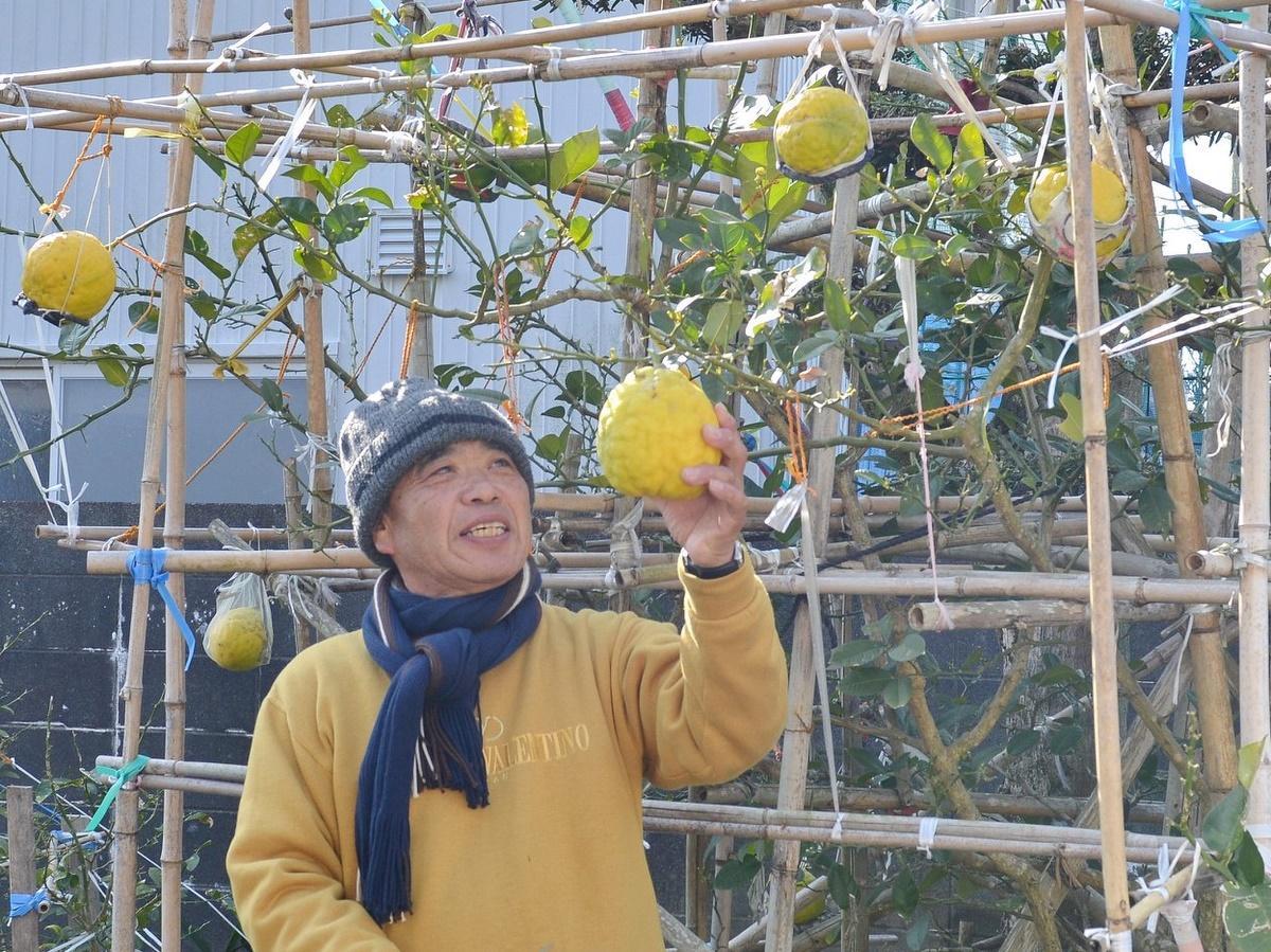 「レモンが重くて」志摩の民家の庭にジャングルジムのような竹の構造物