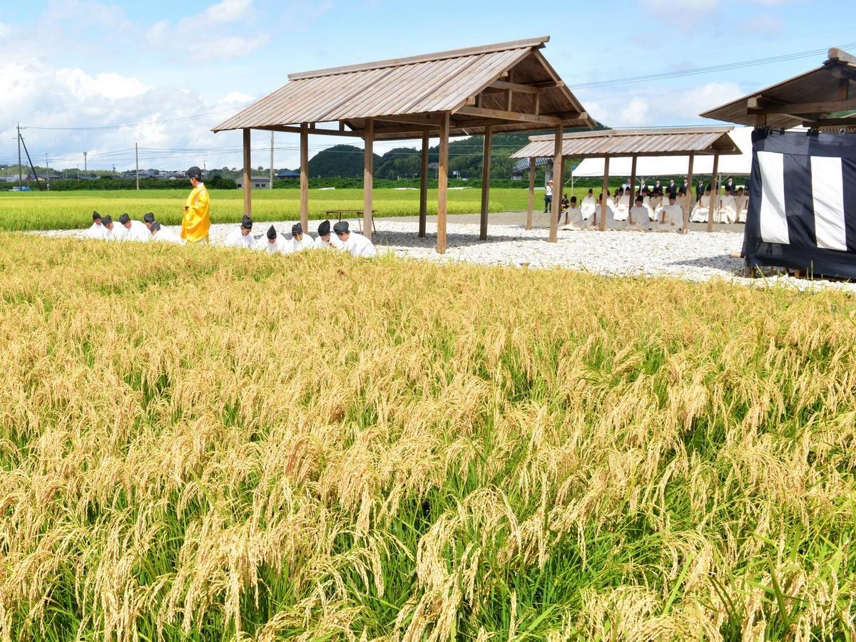 伊勢神宮の専用の水田で稲刈り始め「抜穂祭」