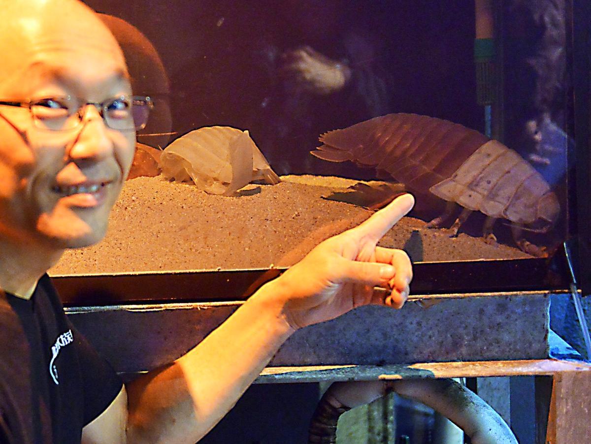 鳥羽水族館のダイオウグソクムシが「ひそかに」半分脱皮 「また一つ謎解明か」
