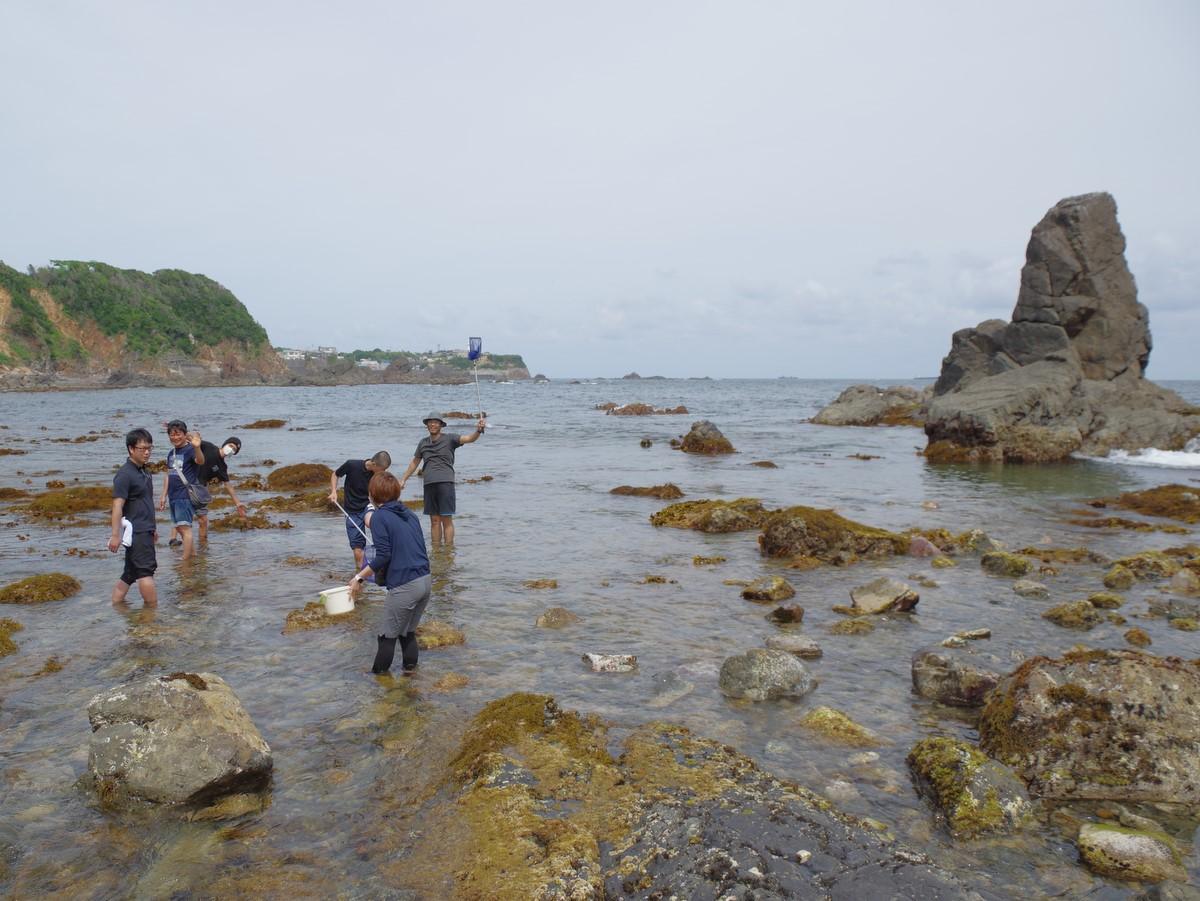 志摩市・代々木高校生が特別活動で磯の観察会 地元の人も知らない浜へ