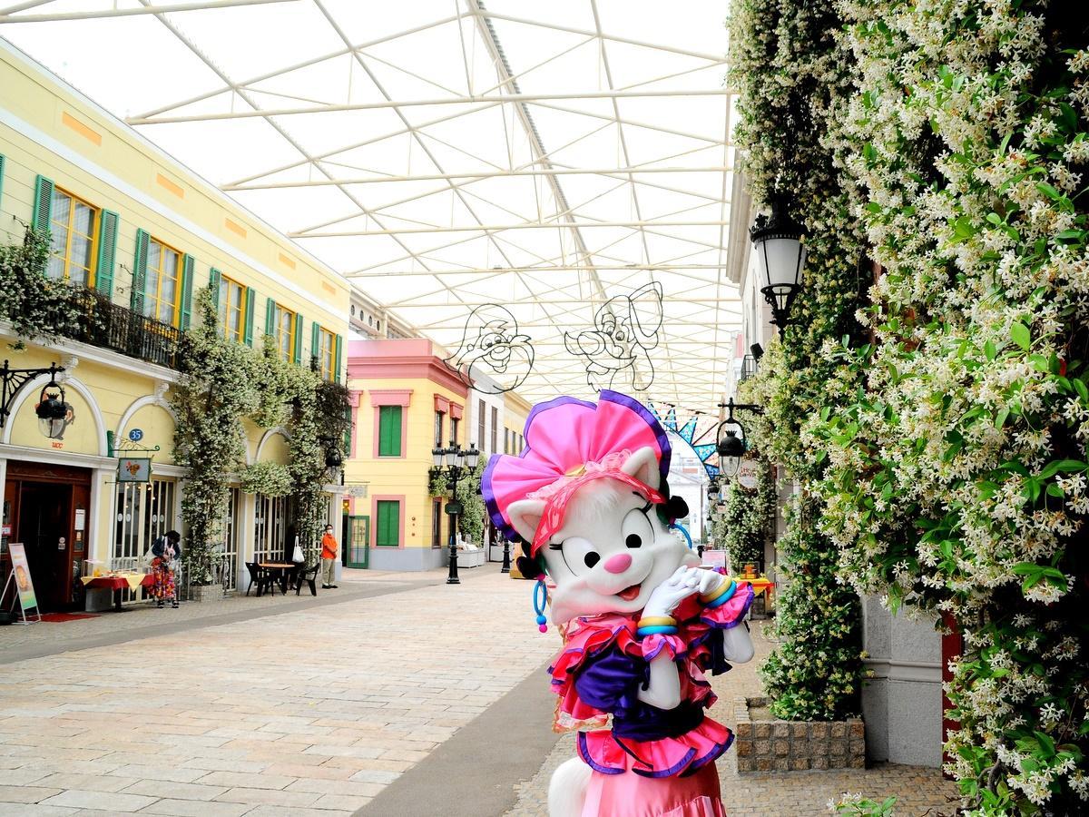 志摩スペイン村のスタージャスミン満開 ホテルの中庭にはハクセキレイが子育て