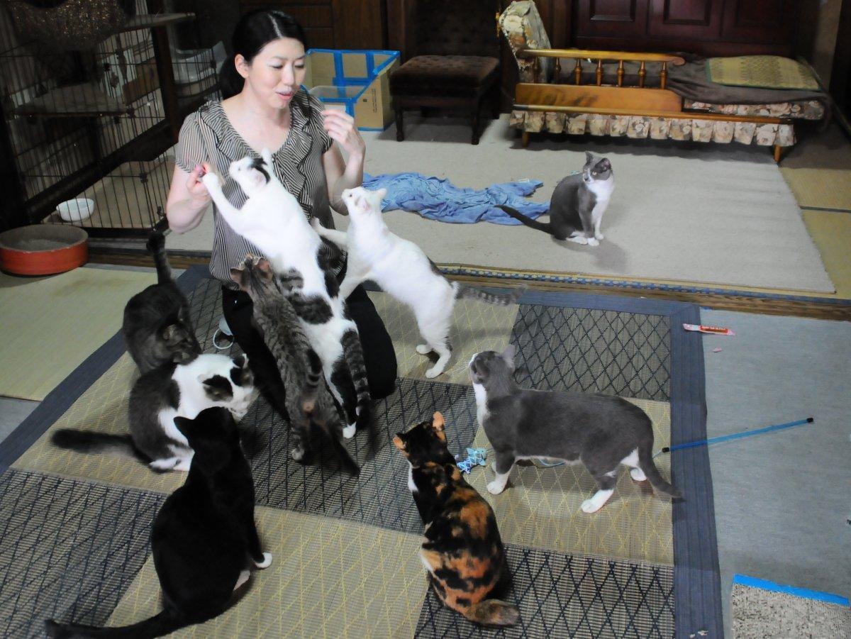 伊勢市内の行き場のないネコに「保護猫シェルター」 資金支援呼び掛け