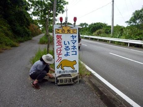 子ネコが目撃された現場付近には看板を設置して注意を呼び掛ける(写真提供:西表野生生物保護センター)