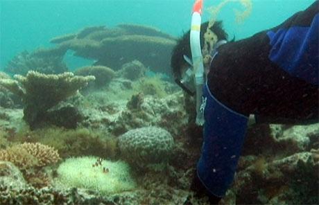 サンゴやカクレクマノミを観察する参加者