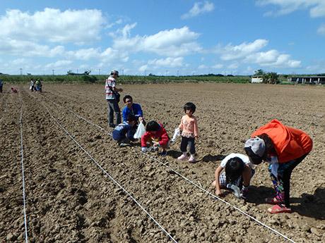 畑に移動してヒマワリの種植えを行う参加者