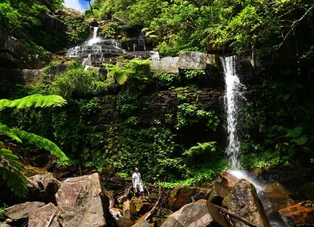 西表島の秘境「ゲータの滝」へのトレッキング