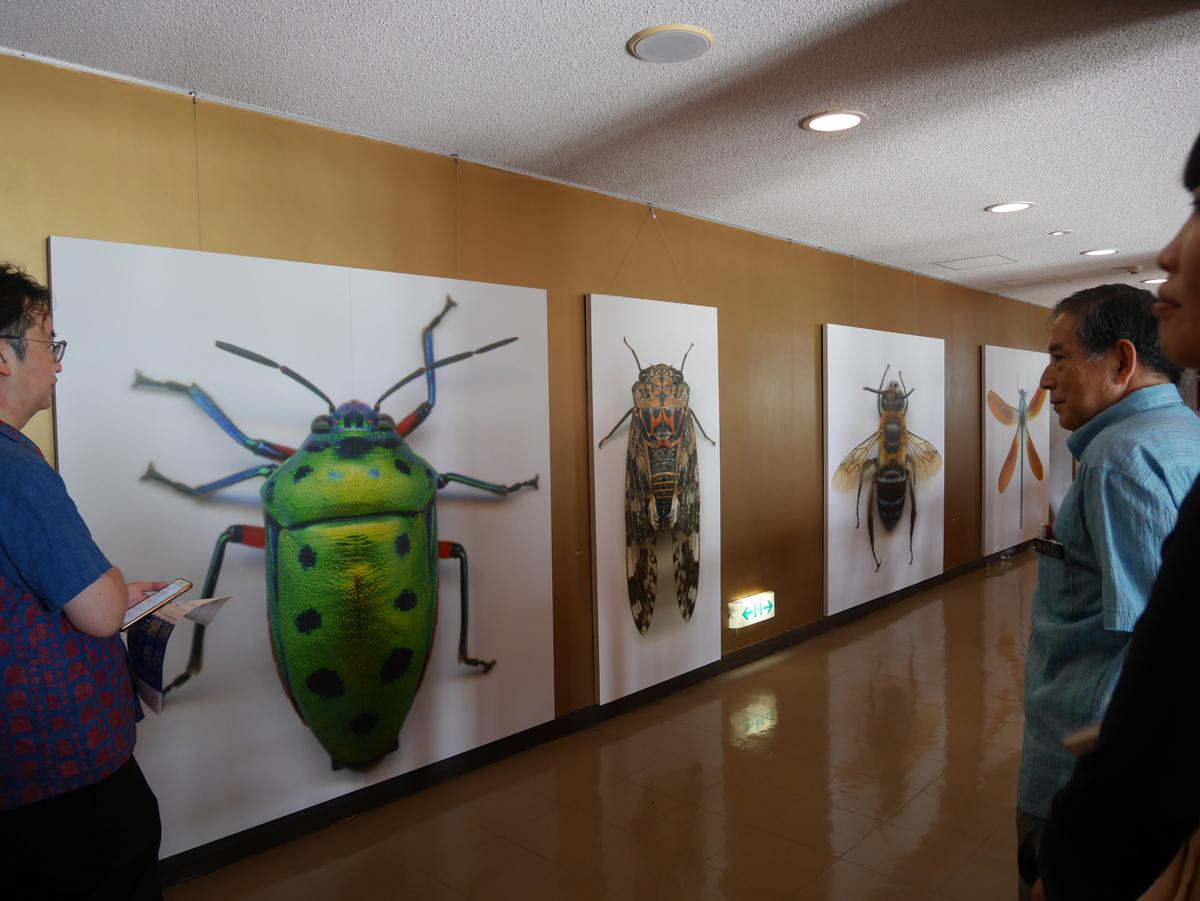 昆虫の立体写真を人間大に拡大したアート作品「life-size」