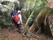 石垣島北部の平久保半島の峠越えの道「安良越地」に小学生がチャレンジ