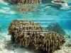 石垣島で「島のことを知る」をテーマに自然観察会 しらほサンゴ村で開催