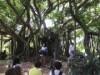 石垣島で三線の日ライブ「唄と三線で島を笑顔に」 ワークショップやフリマも