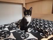 板橋に「泊まれる猫カフェ」 保護猫が暮らす環境で飼い主探しも