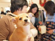 ときわ台のカフェで犬と猫の譲渡会 救う会と飼い主のつながりをきっかけに