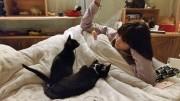 板橋の保護猫カフェで猫の日イベント 添い寝などで保護猫との触れ合いを