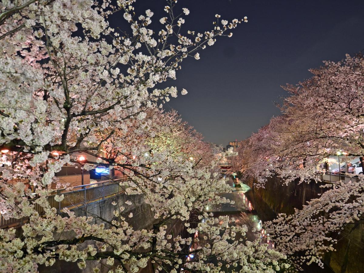 「なかいたさくら祭り」と連携した石神井川沿いの夜桜ライトアップ