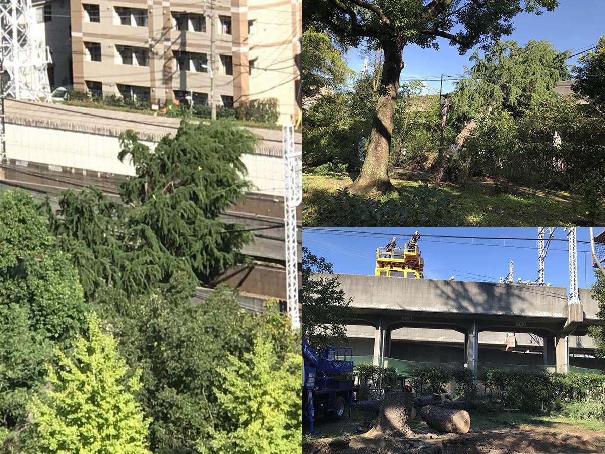 10月1日の都営三田線高架線への倒木、復旧工事の様子