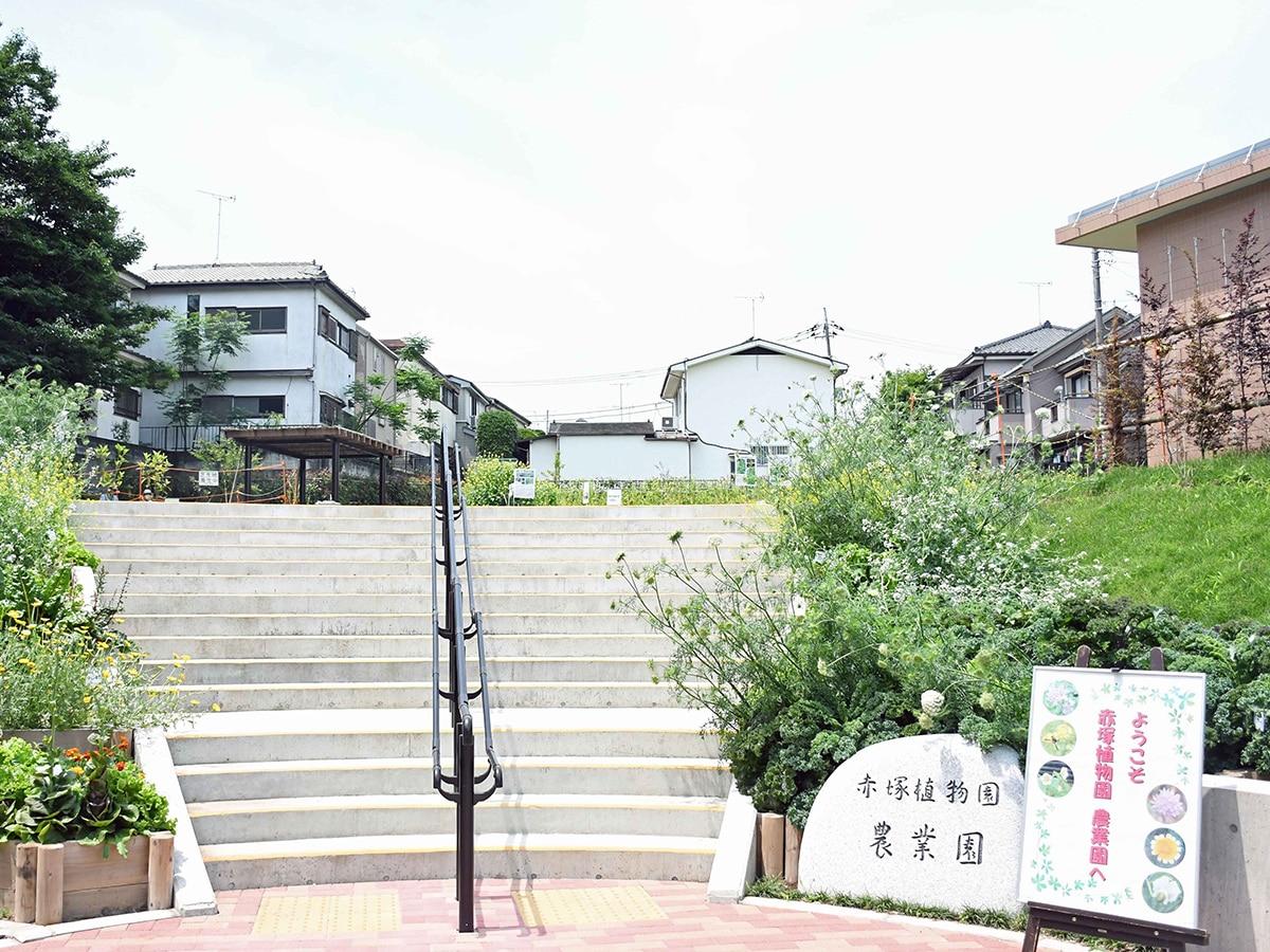 植物園 赤塚