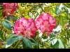 赤塚植物園でグリーンフェスタ2017 自然楽しみながら参加型まちづくりを
