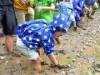 板橋区立水車公園の恒例イベント、今年も 雨の中で田植え体験