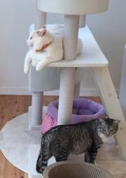 いわきに保護猫ふれあいサロン「おはな」 動物愛護団体が新たな挑戦