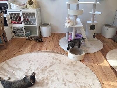 キャットタワーやカーペットなどでくつろぐ保護猫たち