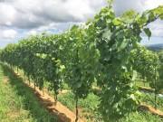 双葉郡川内村でワイン用ぶどう畑の防寒ボランティア 地元住民との交流も