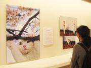 三島の美術館で「ねこ歩き」写真展 国内外のネコ、40年以上の活動集める