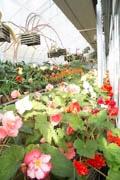 熱川バナナワニ園で「早春花めぐり」企画 寒さの中に「熱帯の花」開花も
