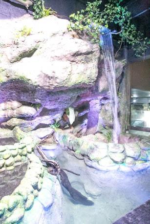 滝を再現した新施設の一部