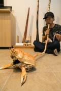 沼津・戸田特産タカアシガニ使った楽器、地域おこし協力隊員が考案
