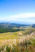 伊豆・細野高原のススキが見頃に 黄金のじゅうたん、「ナウシカみたい」