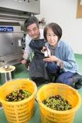 東伊豆町のオリーブ農家、収穫ピークに エンジニア転じ「豊かな暮らし」目指す