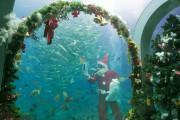 下田の水族館でサンタがえさやり イワシ7000匹にクリスマスプレゼント