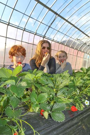 イチゴ狩りを楽しむラトーナさん一家