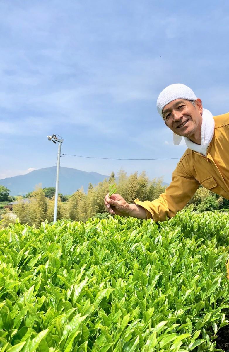 一面の一番茶に囲まれ作業する三須さん