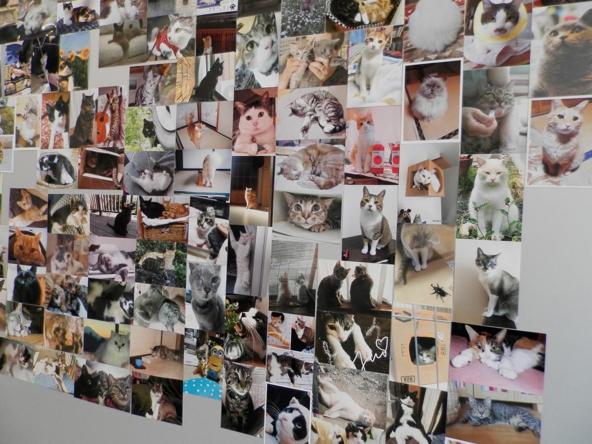 集められたネコ写真たち