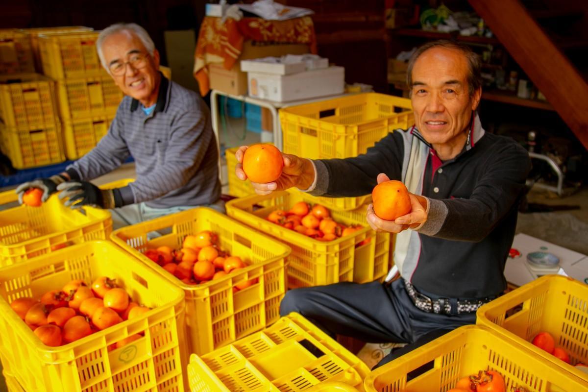愛情をかけた四ツ溝柿を出荷する粟野さん