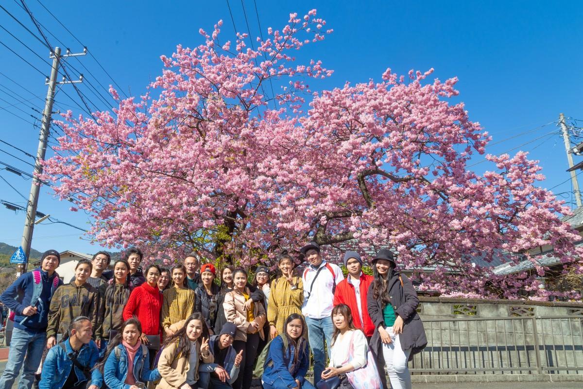 満開の原木で記念撮影する東南アジアの観光客ら