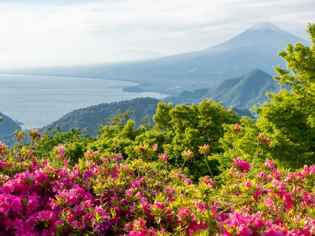 駿河湾と富士山が見渡せる山頂の景色