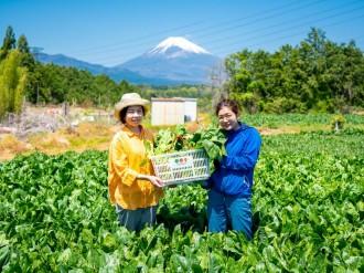 三島で野菜リサイクル「サルベジー」企画 「はじかれ野菜」活用し、買い物かごで詰め放題
