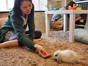 カフェスタイルで遊べるウサギ専門店「ラフ」-自由が丘に2号店