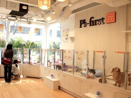 常時約50匹の子犬・子猫を展示販売する「P's-first(ピーズファースト)自由が丘店」店内の様子