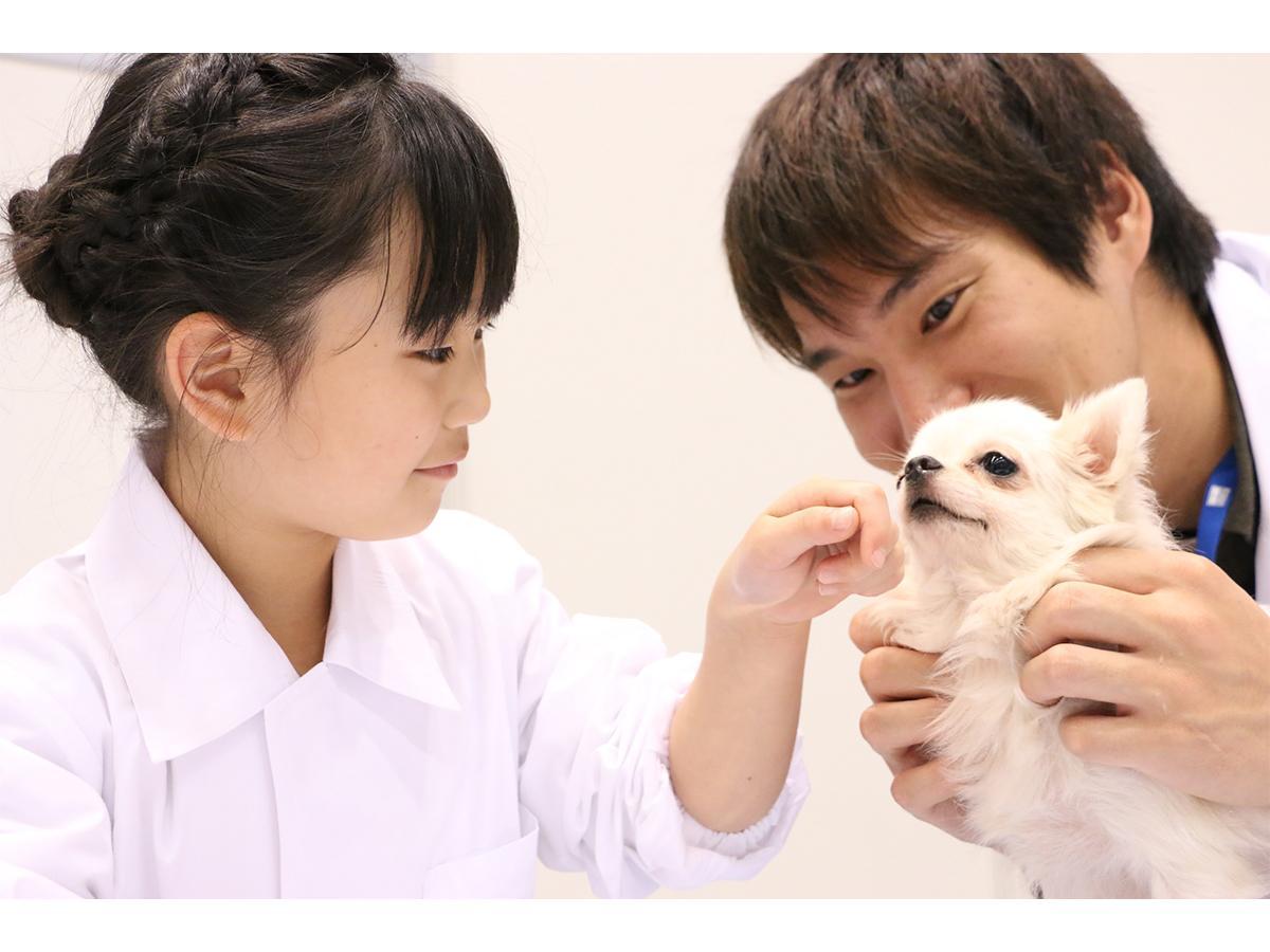 「動物感謝デー in JAPAN」の人気プログラム「1日獣医師体験コーナー」(写真は過去開催時の様子)