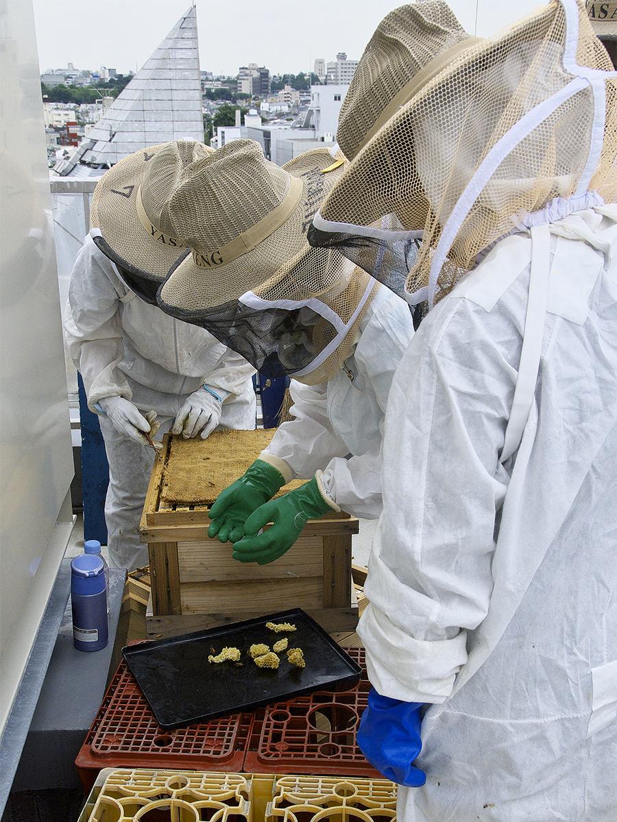 自由が丘商店街振興組合が街でミツバチを育てる都市養蜂「丘ばちプロジェクト」作業の様子