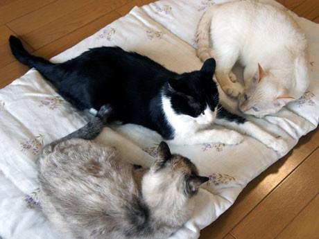 猫の一時預かり所、「のんきなねこ家」として一般開放。里親とのスムーズなマッチング目指す