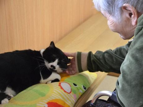 鹿児島・天文館の猫カフェ「そら猫」からセラピーキャット誕生。グループホームに引き取られた「じろう」。
